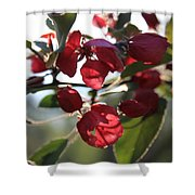 Spring Crabapple Blossom Shower Curtain