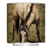 Spring Creek Basin Wild Horse Grazing Shower Curtain