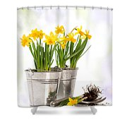 Spring Daffodils Shower Curtain by Amanda And Christopher Elwell