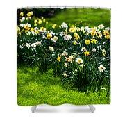 Spring Daffodils. Park Keukenhof Shower Curtain