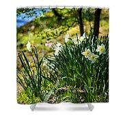 Spring Daffodils.park Keukenhof Shower Curtain