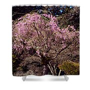 Spring Day In Park Shower Curtain