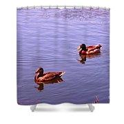 Spring Ducks Shower Curtain