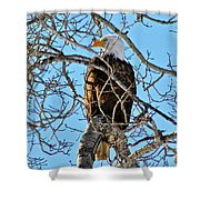 Spring Eagle Shower Curtain