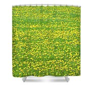 Spring Farm Panorama With Dandelion Bloom In Maine Canvas Poster Print Shower Curtain