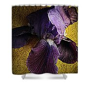 Spring Finery  Shower Curtain