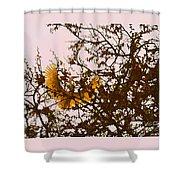 Spring Flight Shower Curtain