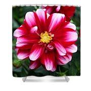 Spring Flower 1 Shower Curtain