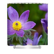 Spring Flowers 1. Flowers Of Holland Shower Curtain