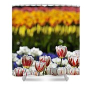 Spring Flowers 11 Shower Curtain