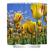 Spring Flowers 12 Shower Curtain