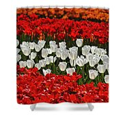 Spring Flowers 16 Shower Curtain