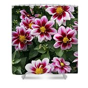 Spring Flowers 4 Shower Curtain