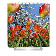 Spring Flowers 7 Shower Curtain