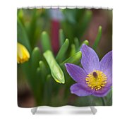 Spring Flowers. Flowers Of Holland Shower Curtain