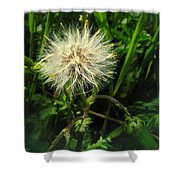 Spring Forest Embellishments 2 Shower Curtain