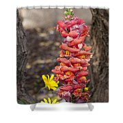 Spring Framed Shower Curtain