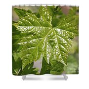 Spring Grape Leaf Shower Curtain