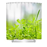 Spring Green Sprouts Shower Curtain by Elena Elisseeva