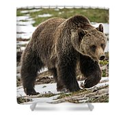 Spring Grizzly Bear Shower Curtain
