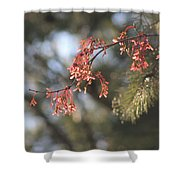 Spring Growth Bathed In Sunlight Shower Curtain