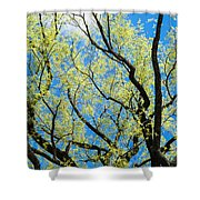 Spring Has Come - Featured 3 Shower Curtain
