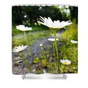 Spring In Campbell Hall Shower Curtain