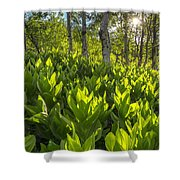 Spring In The Wasatch Shower Curtain