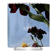 Spring Iris Skies Shower Curtain
