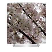 Spring Is Beautiful - A Cloud Of Pastel Pink Blossoms Shower Curtain