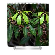Spring Is Nigh Shower Curtain