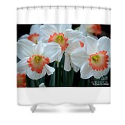 Spring Jonquils Shower Curtain