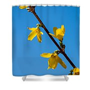 Spring Lights Shower Curtain