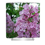 Spring Lilac Shower Curtain