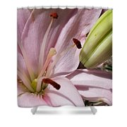 Spring Lily Pink Shower Curtain