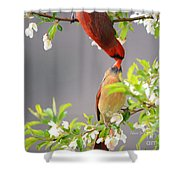 Cardinal Spring Love Shower Curtain