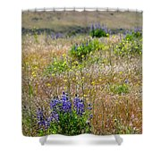 Spring Lupines And Cheatgrass Shower Curtain