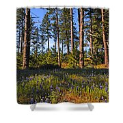 Spring Lupines In The Forest Shower Curtain