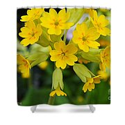 Spring Lyric Shower Curtain