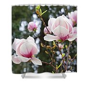 Spring Magnolia Tree Flowers Pink White Shower Curtain