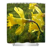 Spring Meadow Field Daffodil Flowers Shower Curtain