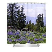 Spring Mountain Lupines Shower Curtain