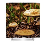 Spring Mushrooms Shower Curtain