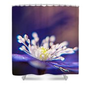 Spring Music  Shower Curtain