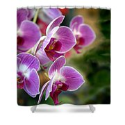 Spring Orchids I Shower Curtain