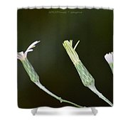 Spring Phase Shower Curtain