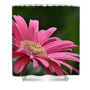Spring Pink 2014 Shower Curtain