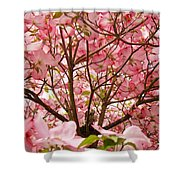 Spring Pink Dogwood Tree Blososms Art Prints Shower Curtain by Baslee Troutman