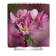 Spring Pink... Shower Curtain