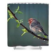 Song Bird In Spring Shower Curtain
